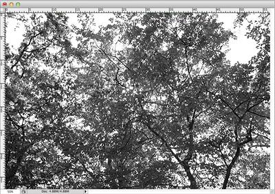 Image de base pour le tutoriel après avoir appliqué le mode niveaux de gris